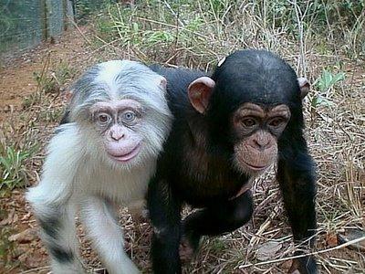Gratuitious Monkey Shot