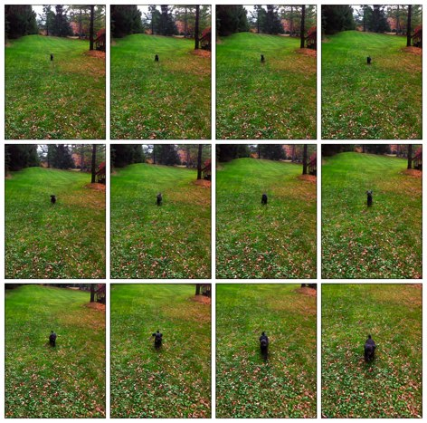QuickAdvice: Capture The Action With Burst Mode – Plus, Win A Promo Code!